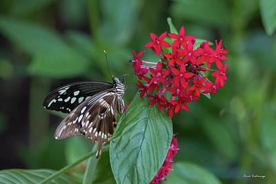 Photograph - Indoor Living Day Butterfly Center Callaway Gardens Art by Reid Callaway