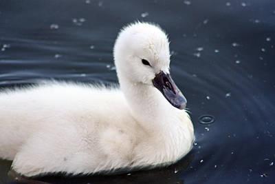 Infant Swan Original