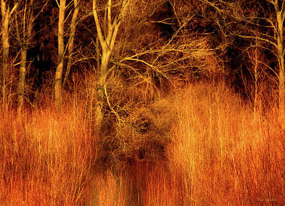 Inferno Photograph - Inferno by Wim Lanclus