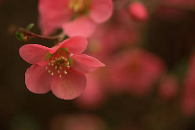 Photograph - Infinite Pink by John Harding