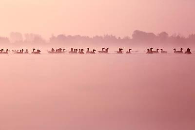 Infinity - Geese In The Mist Art Print