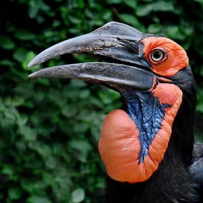 Photograph - Inflatable Hornbill by KJ Swan