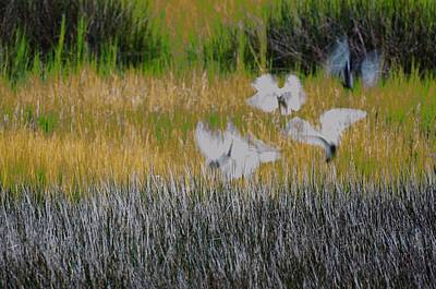 Photograph - Inflight  by Mary Hahn Ward