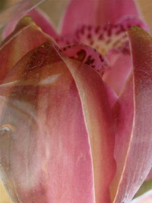 Photograph - Inflorescence by Paul Gladden
