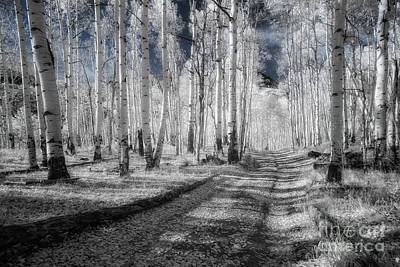 Photograph - Infrared Aspens by Marianne Jensen