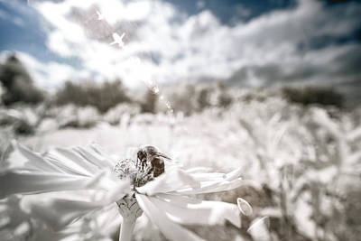 Photograph - Infrared Bee In Its World by Brian Hale