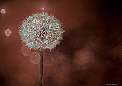 Photograph - Infrared Dandelion by Suzanne Stout