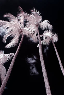 Exotic Photograph - Infrared Palm Trees by Adam Romanowicz