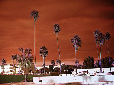 Photograph - Infrared Palms by Hugh Smith