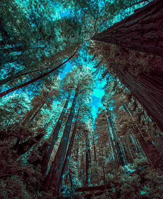 Coastal Forest Photograph - Infrared Redwood by Paul Freidlund