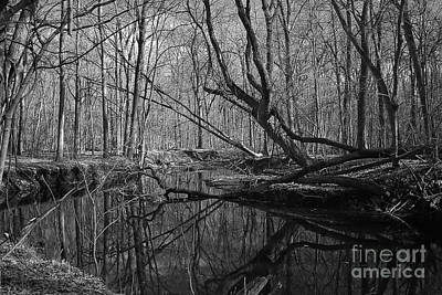 Infrared Reflections Art Print by Alan Look
