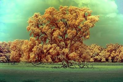 Photograph - Infrared Surreal Tree Canopy by Louis Ferreira