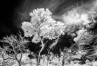 Photograph - Infrared Tree Tops by Roseanne Jones