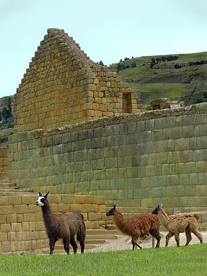 Photograph - Ingapirca Incan Ruins 109 by Jeff Brunton