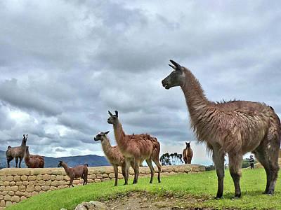 Photograph - Ingapirca Incan Ruins 120 by Jeff Brunton