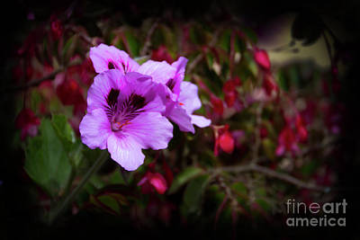 Photograph - Ingapirca Orchid by Al Bourassa