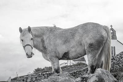 Long Mane Photograph - Inis Mor Old Spirit by Betsy Knapp
