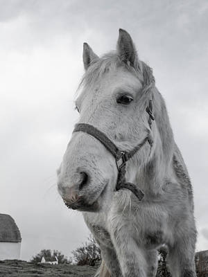 Horse Ears Photograph - Inis Mor Old Timer by Betsy Knapp
