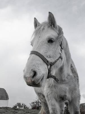 Long Mane Photograph - Inis Mor Old Timer by Betsy Knapp