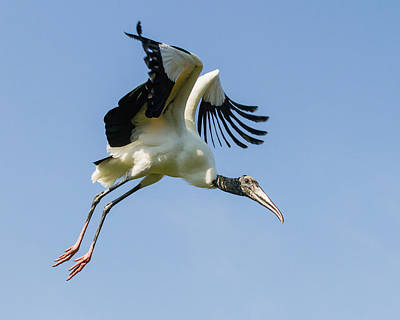 Photograph - Initiate Flight by Dawn Currie