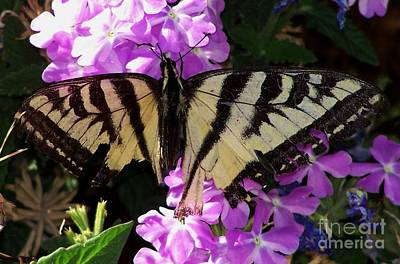 Art Print featuring the photograph Injured Swallowtail by Erica Hanel