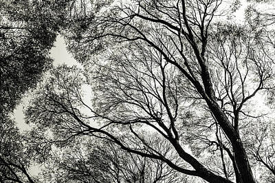 Photograph - Ink Patterns. Airy Lace Of Autumn by Jenny Rainbow