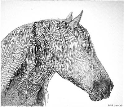 Ink Pen Drawing Of A Horse Art Print