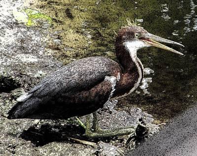 Inky Bird Original by Neil Oxenburg