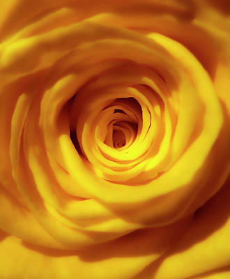 Photograph - Inner Beauty Of A Rose by Johanna Hurmerinta