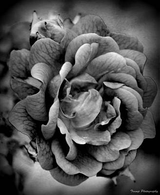 Photograph - Inner Beauty by Wesley Nesbitt