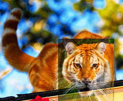 Merging Photograph - Inner Cat by David Lee Thompson
