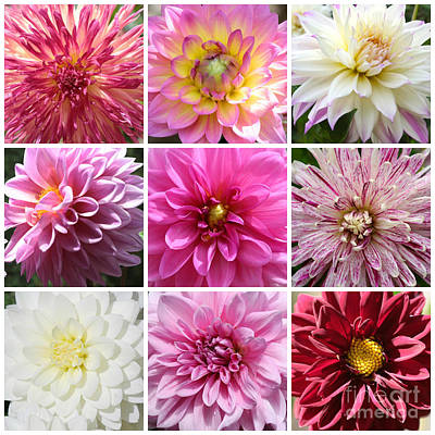 Photograph - Inner Dahlia Collage by Carol Groenen