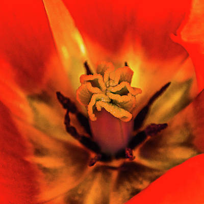 Photograph - Inner Floral Macro Abstract by Julie Palencia