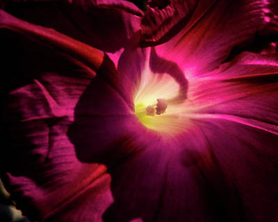 Photograph - Inner Glow by Jay Stockhaus