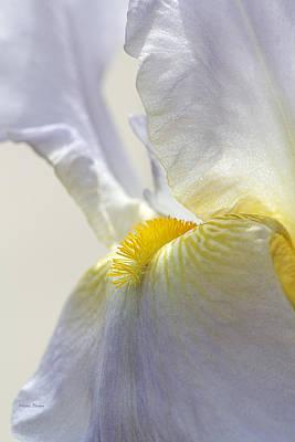 Photograph - Inner Glow Lavender Iris by Phyllis Denton