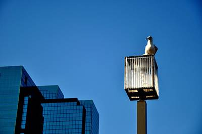 Photograph - Inner Harbor Sitting Seagull by Andrew Dinh
