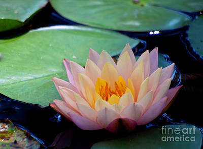 Photograph - Inner Peace by Ken Frischkorn
