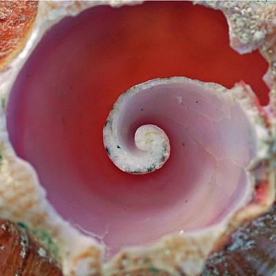 Photograph - Inner Spiral by Brandy Herren