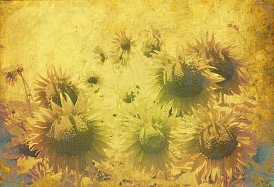 Photograph - Inner Sunshine by Dorothy Berry-Lound