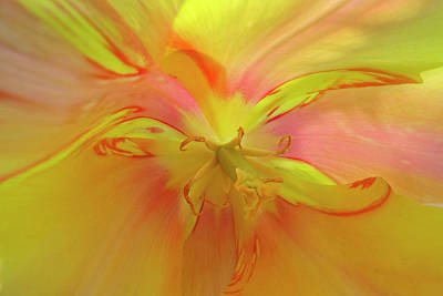 Photograph - Inner Tulip by Inge Riis McDonald
