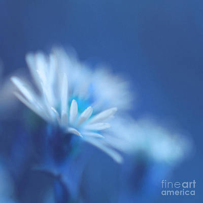 Indigo Photograph - Innocence 11b by Variance Collections