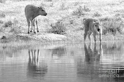 Photograph - Innocence On The Water Black And White by Adam Jewell