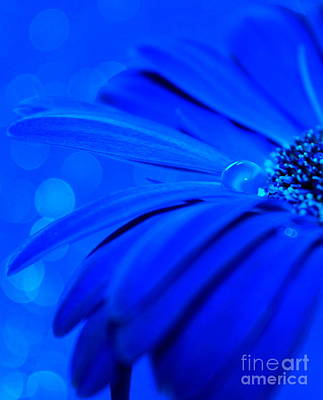Blue Flowers Photograph - Innocent Blues by Krissy Katsimbras