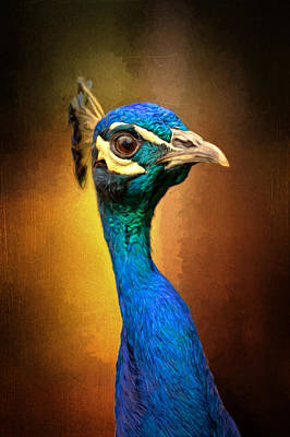 Photograph - Inquisitive Peacock by Susan Rissi Tregoning