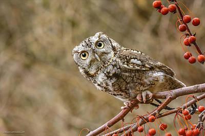 Photograph - Inquisitive Screech Owl by LeeAnn McLaneGoetz McLaneGoetzStudioLLCcom