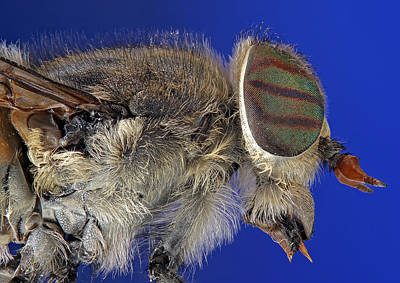 Insect Photograph - Insect by Jan Boesen
