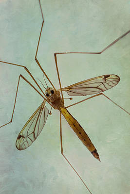 Photograph - Insect Abstract - Crane Fly by Patti Deters