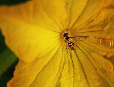 Photograph - Insect-inside by Keith Smith