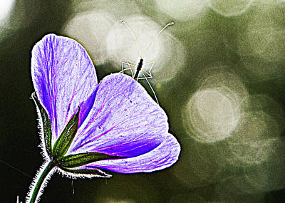 Purple Flowers Digital Art - Insect On A Purple Flower by Susan Stone