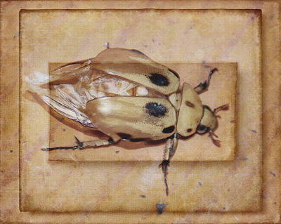 Insect On Wooden Board Art Print